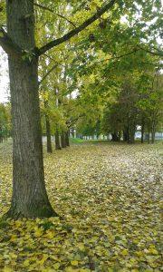 automne sur Laon